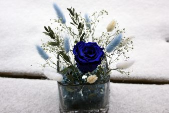 Blue eternal rose with preserved bunny tails