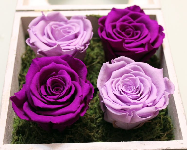 Lavender and Purple Eternal Roses